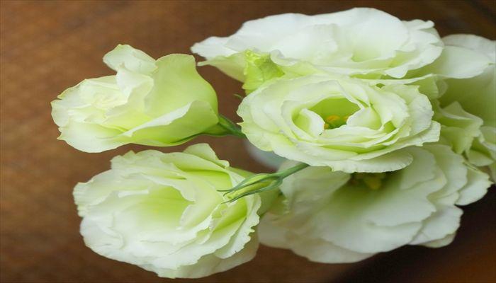 ジューンブライド 花 トルコキキョウ
