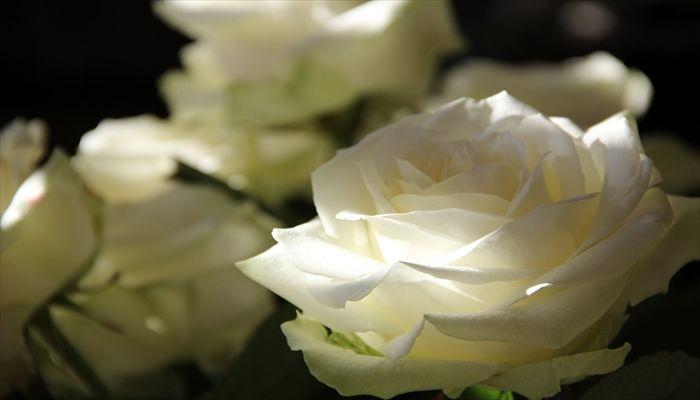 ジューンブライド 花 バラ
