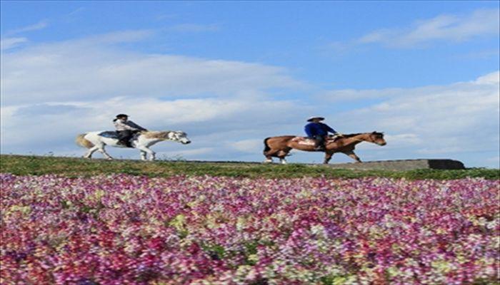 秋にすること 乗馬