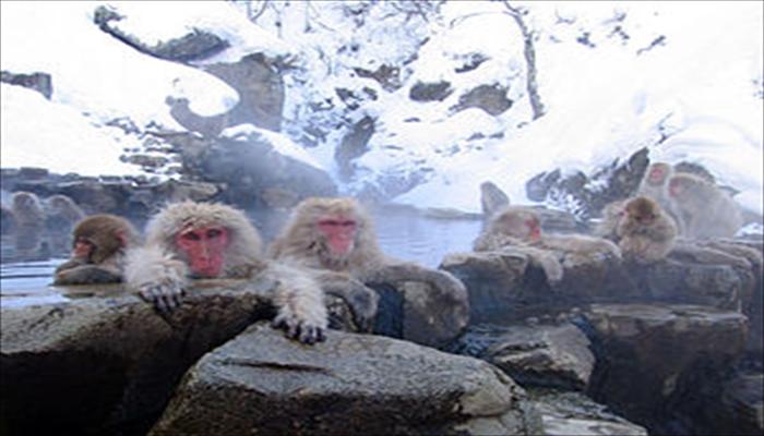 冬にしたいこと 温泉に入る猿を見に行く
