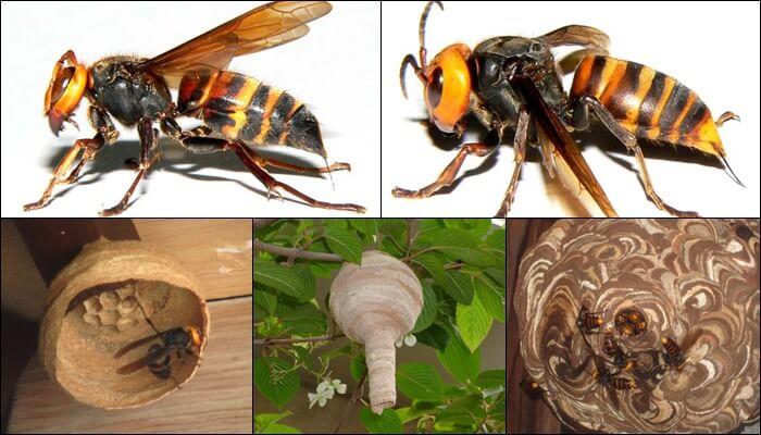 スズメバチの巣 見分け方