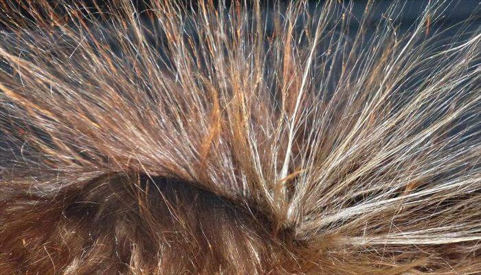 静電気 除去方法 髪の毛