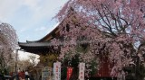 On the Sensoji Temple grounds