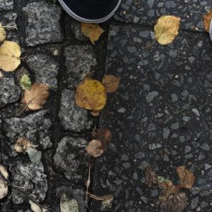 DAY OF UNTITY 3 OCTOBER 2019 – Autumn leaves – Separate us?