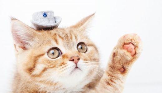 猫にハンドヒーリングしたら水をガブガブ飲みだす!