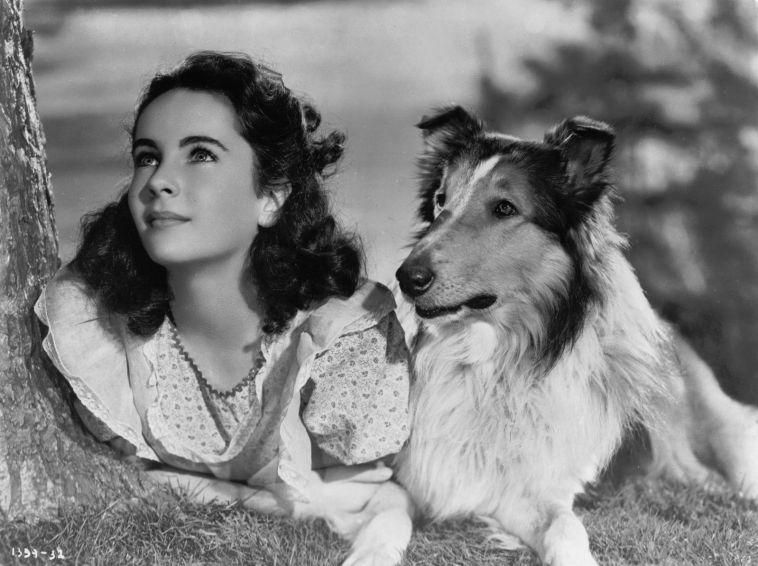 Jedenastoletnia Elizabeth Taylor naplanie Lassie wróć.