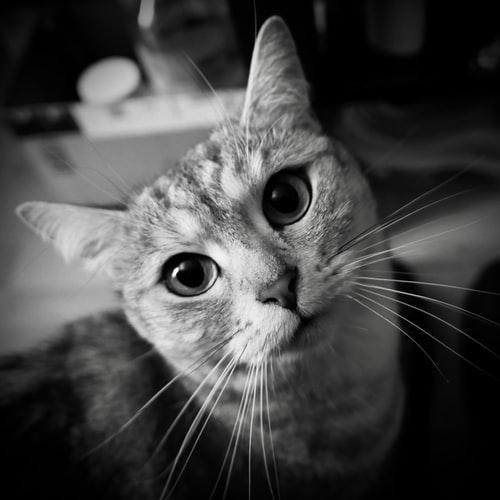 ทำไมแมวบางตัวจึงไม่พอใจ