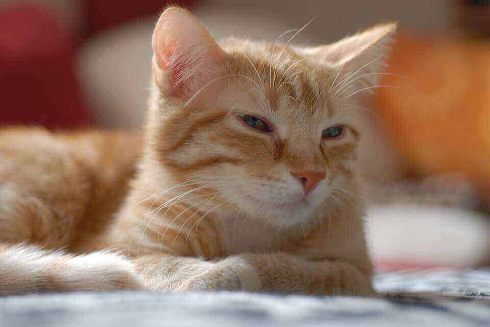 Podrobné pokyny Jak udělat injekci kočky intramuskulárně