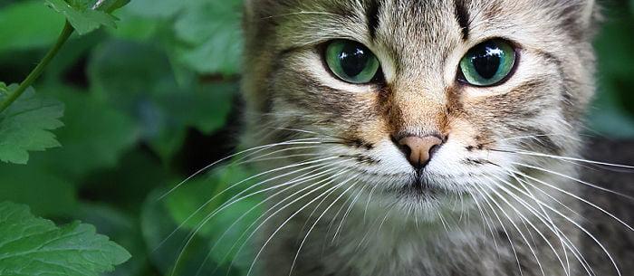 Что будет, если кошке или коту обрезать усы
