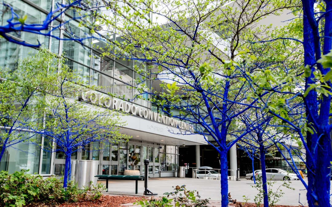 Why are the trees in Denver blue? Denver Photographer