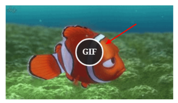 WordPress GIFs - How to Use Them On Your Website