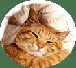 cat_paradise