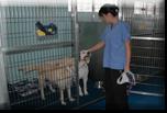 Kipling Veterinary