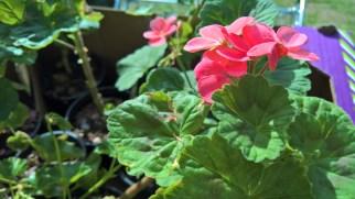 plants-at-garage-sale