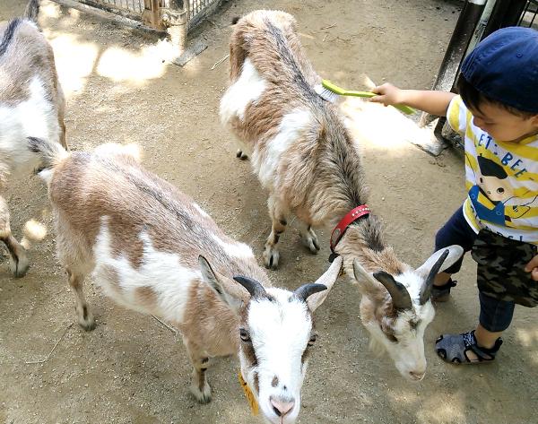【埼玉県】智光山公園こども動物園で水遊びは出来るの?動物と触れ合えるおすすめ動物園