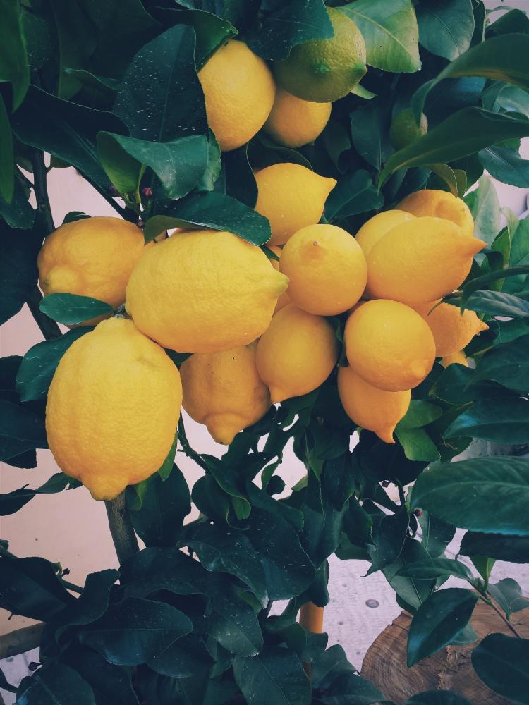 Life seems to be giving us abundant lemons these days