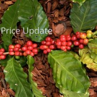 Coffee Prices (Karnataka) on 19-09-2019