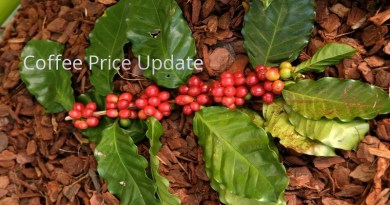 Coffee Prices (Karnataka) on 20-03-2019