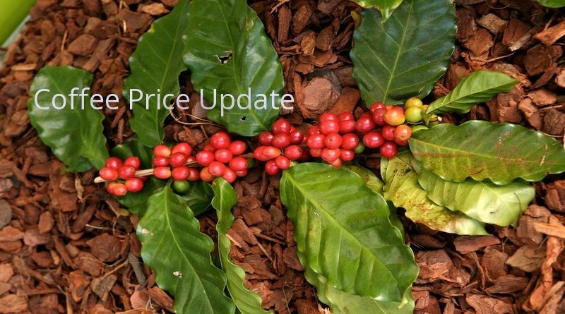 Coffee Prices (Karnataka) on 20-06-2019