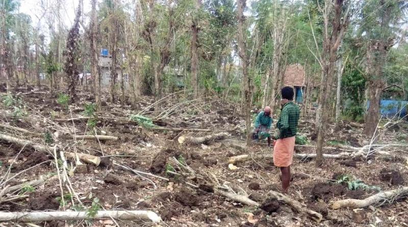Wayanad Farmers Started Uprooting Pepper Vines