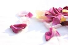 バラの花びら6