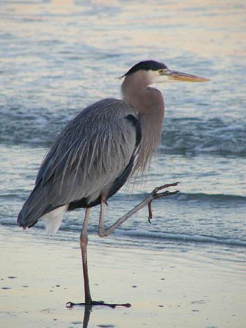 This image has an empty alt attribute; its file name is heron.jpg
