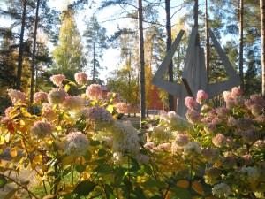 Kaunis kuva valkoisista ja vaaleanpunaisista kukista, taustalla betoninen teos.