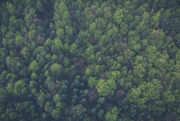 bcuc-forest