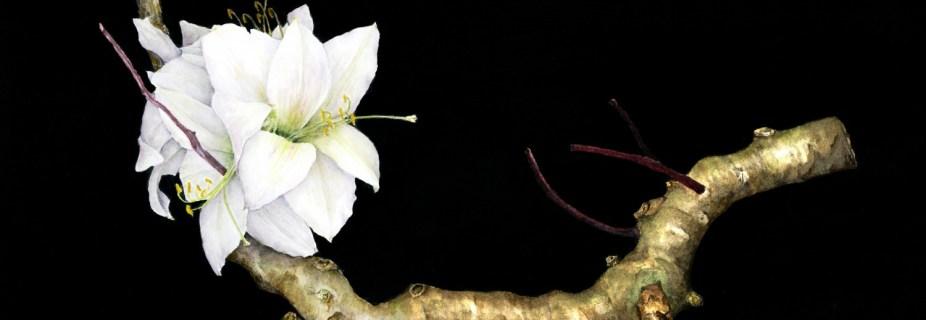 cropped-branchandlillies.jpg
