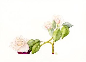 Rose_shoe