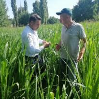Kırklareli'nde üreticiler yaprak kurduna karşı bilgilendirildi