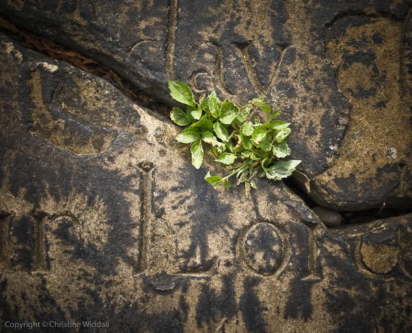 Grave, Thornhill
