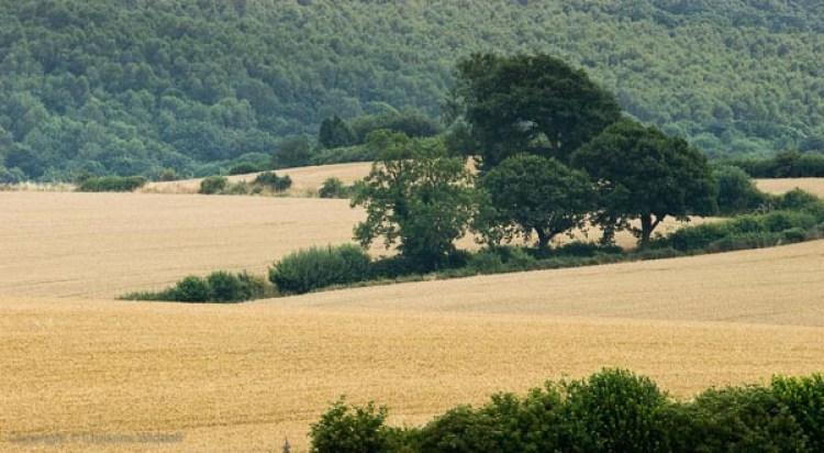 Farmland at Thornhill