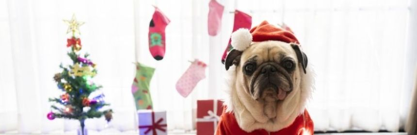 Dog in Santa hat with Christmas Tree in the background