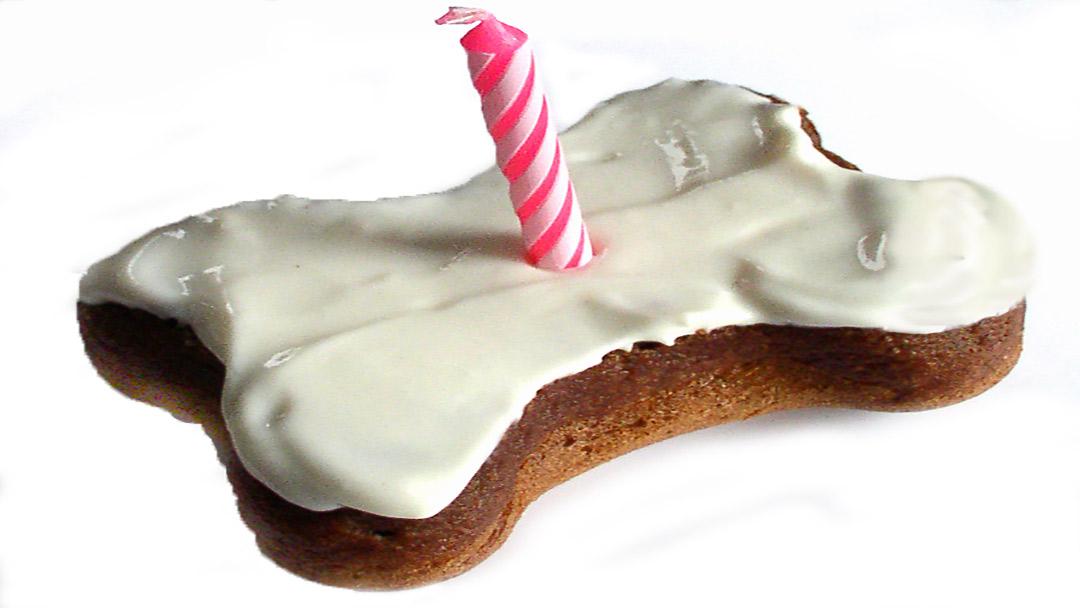 Puppy Cake - Shark Tank