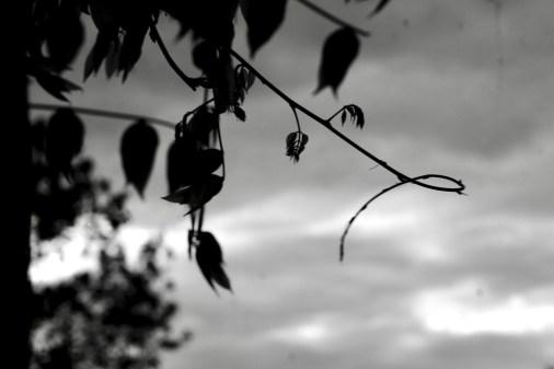 McElhearn-bw-untitled-8