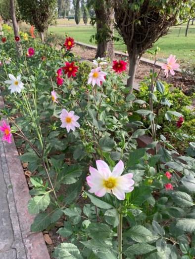 Flowers blooming everywhere