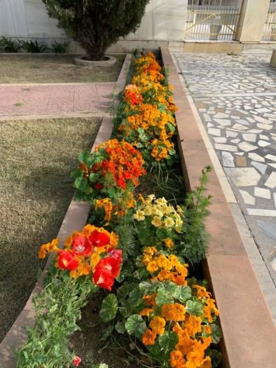 Kirpal Sagar in bloom