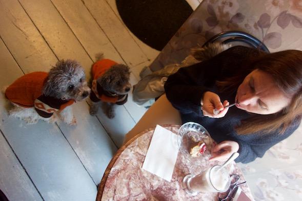Espanjasta adoptoidut kahvilakoirat tiesivät kyllä, keneltä kannattaa kerjätä - ja oikein arvasivat!