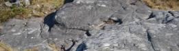 Petroglyphen Laxe das Rodas, Galizien