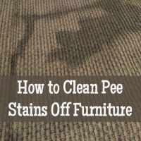 How to Clean Pee Off Furniture and Carpets