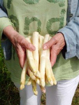 asparges-hvide