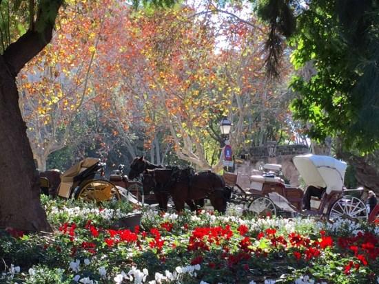 Mallorca.hestevogne