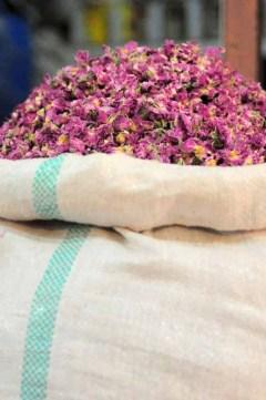 iran.rosenblade
