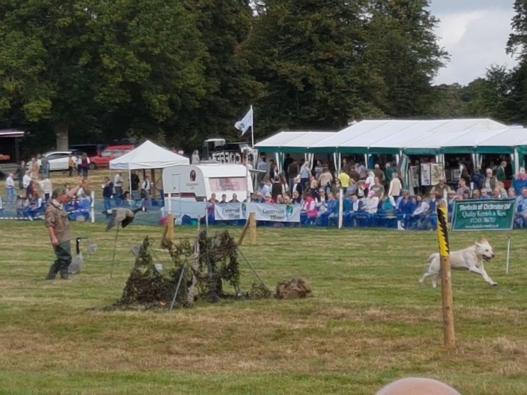 Chris Green demonstration of Wildfowling Past and Present at Hampshire Country Sports Day 2018