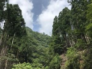 桐生川支流でソロキャンプ DAY2