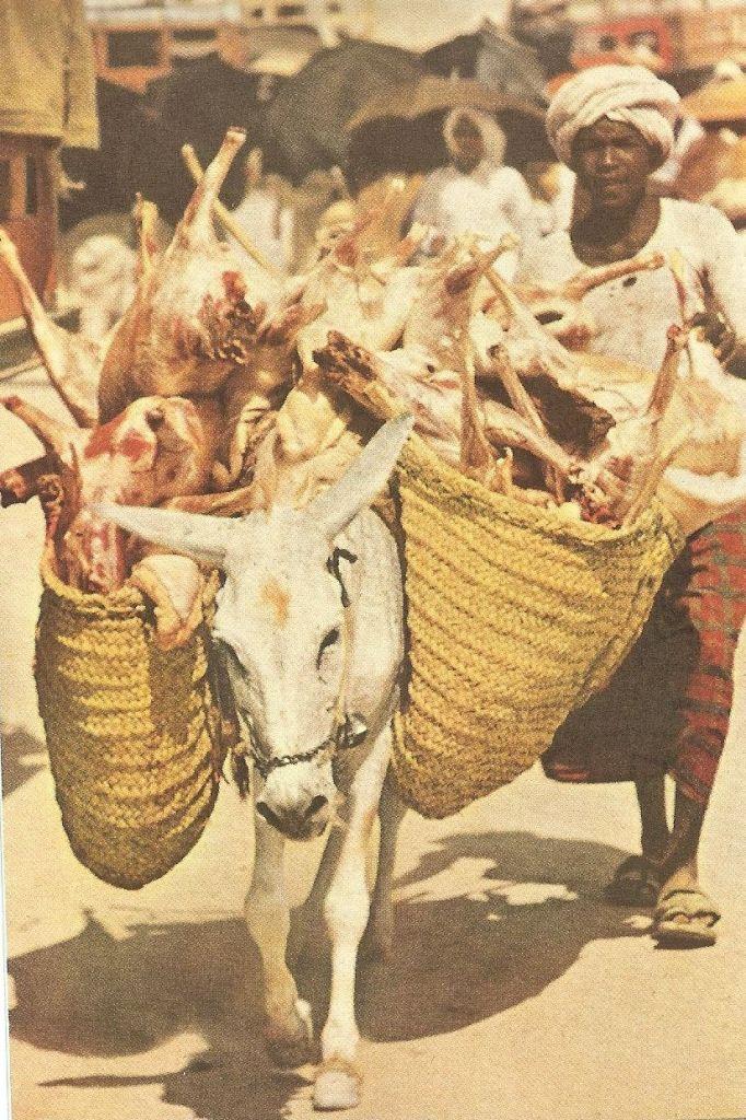19. Keledai Pembawa Daging Kurban