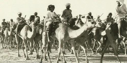 Caravan onta di Dubai. Berlangsung antara tahun 1960an – 1970an.