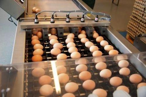 tojásbegyűjtés
