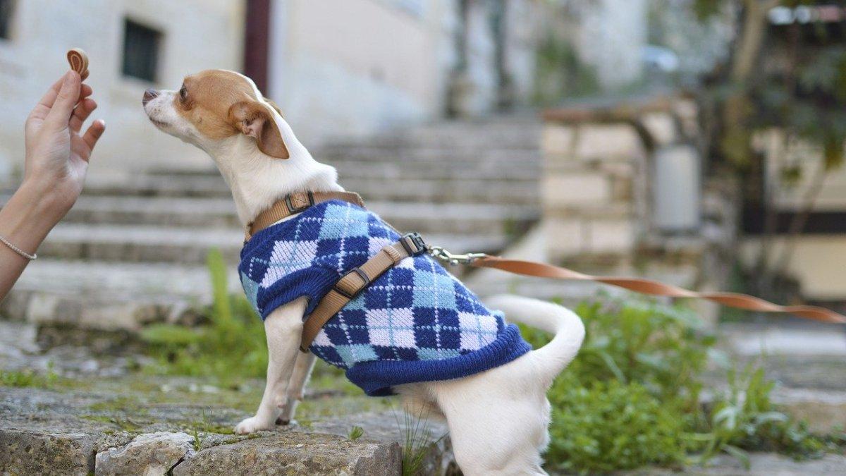 dog taking treat -kiss dog training